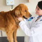 Зачем стерилизуют собак