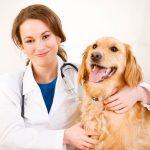 С ветеринаром удобно проконсультироваться онлайн