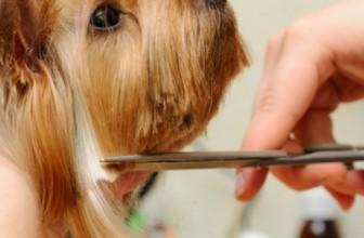Почти всех собак нужно периодически стричь