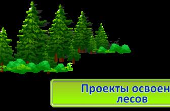 Создаем проект освоения лесов
