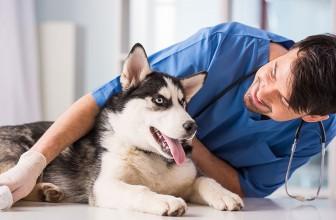 Ветеринары на страже здоровья фауны